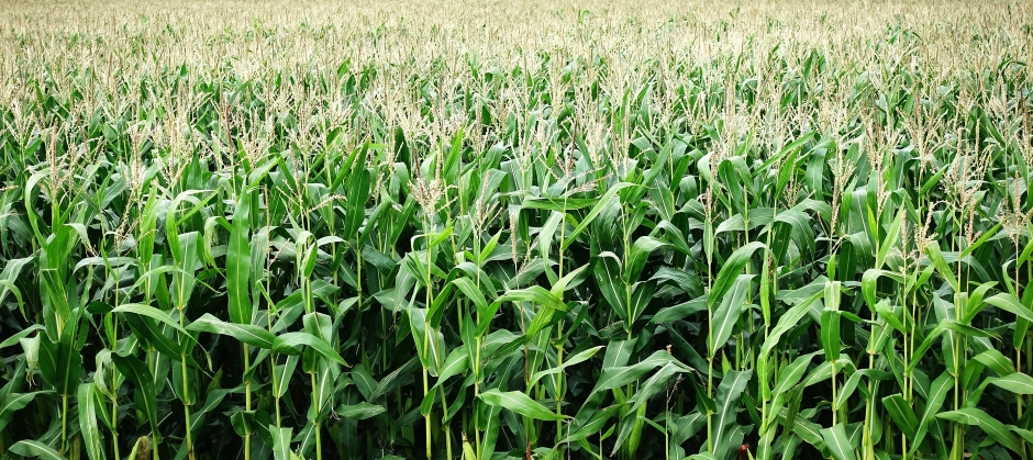 Process increases viability of biofuels from plant waste