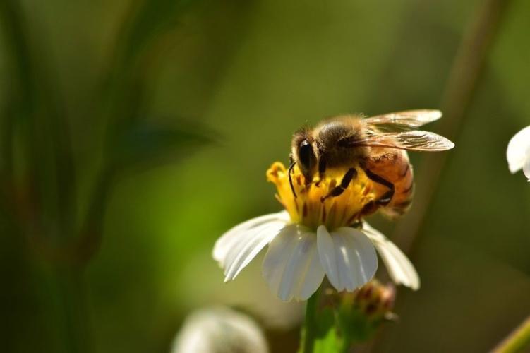 BeeSave