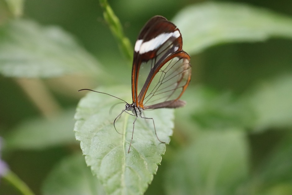 Butterfly wings encourage 'invisible' photo voltaic applied sciences