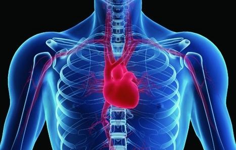 coronary heart