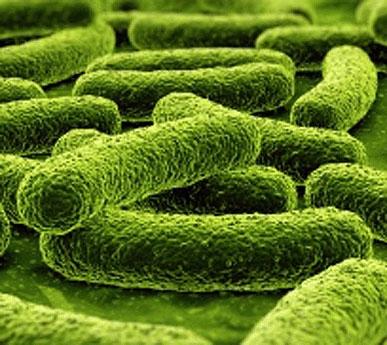 /m/m/d/TE_bacteria.jpg