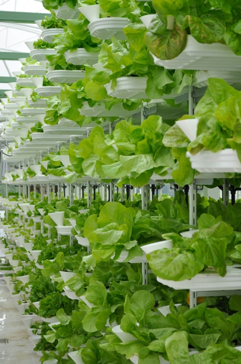 The Vancouver installation will produce 150,000 (68 tonnes) pounds of leafy green vegetables and herbs a year