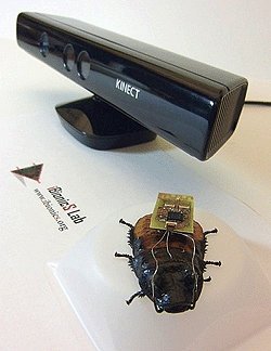 Cockroach biobot autopilotted by Kinect