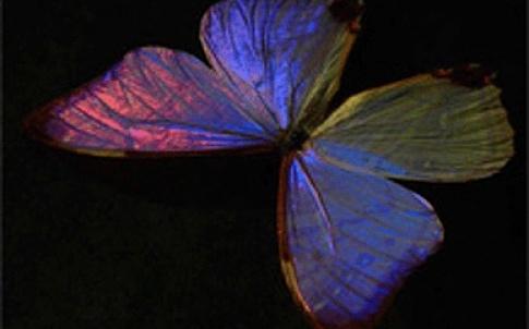 /o/g/i/TE_Butterfly.jpg