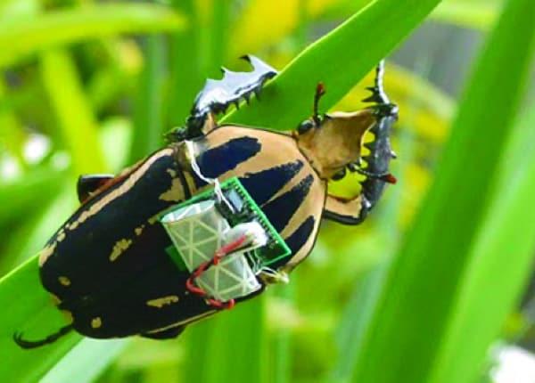 /r/x/v/TE_Beetle_backpack.jpg