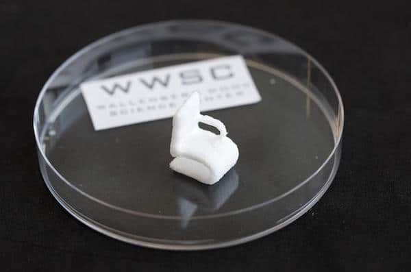 The tiny chair made of cellulose is a demonstrational object printed using the 3-D bioprinter at Chalmers University of Technology