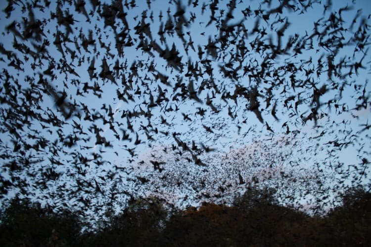 The team tested the ultrasonic microphone in a local park where they knew there were bats