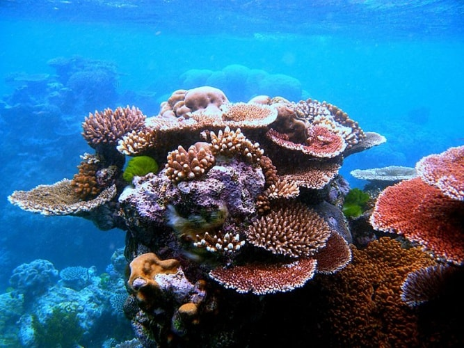 Rising acidity in the oceans is a threat to marine life, particularly shellfish and coral.