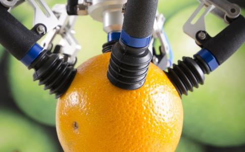 Fruit picking robot
