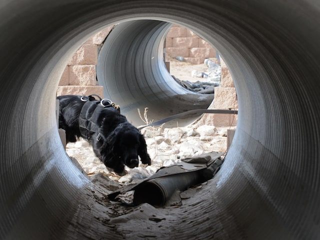 Rocky 53, a tactical explosive detection dog assigned to the 37th Infantry Brigade Combat Team, sniffs out explosives during training at the National Training Center at Fort Irwin, Calif., Nov. 24, 2011. The 37th IBCT will be utilizing TEDDs during their upcoming deployment to Afghanistan in support of Operation Enduring Freedom. (37th IBCT photo by Sgt. Kimberly Lamb) (Released)