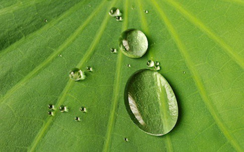 Researchers are replicating the lotus leaf, one of the most hydrophobic surfaces on the planet
