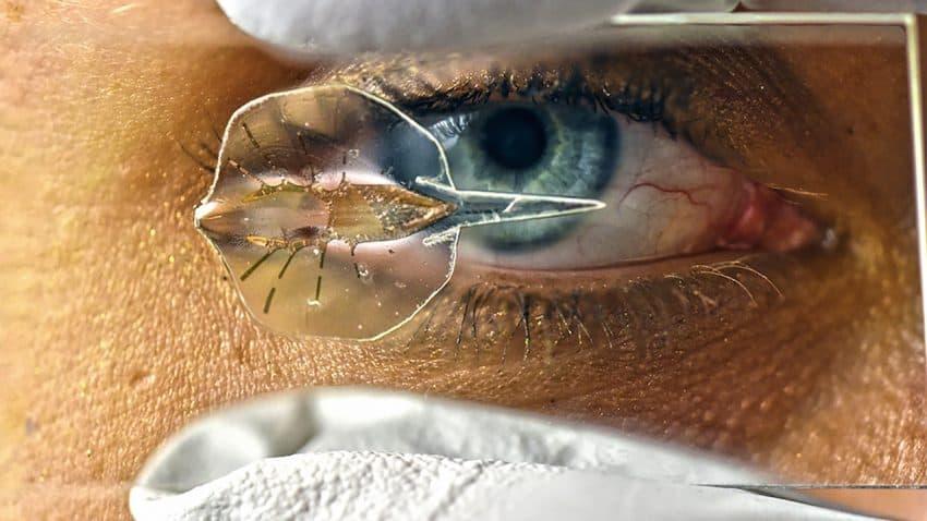 The biomechanical stingray, on a glass slide. Image Science/Karaghen Hudson & Michael Rosnach