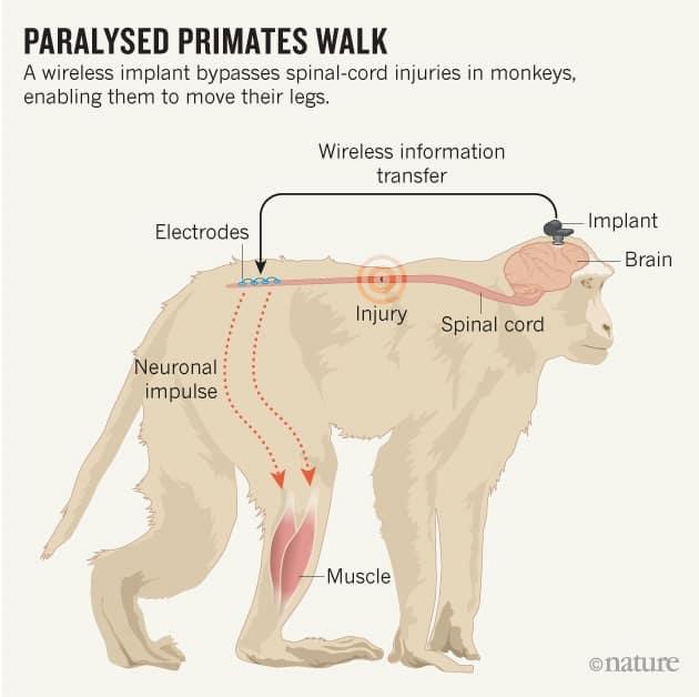 monkey-graphic-online_NATURE