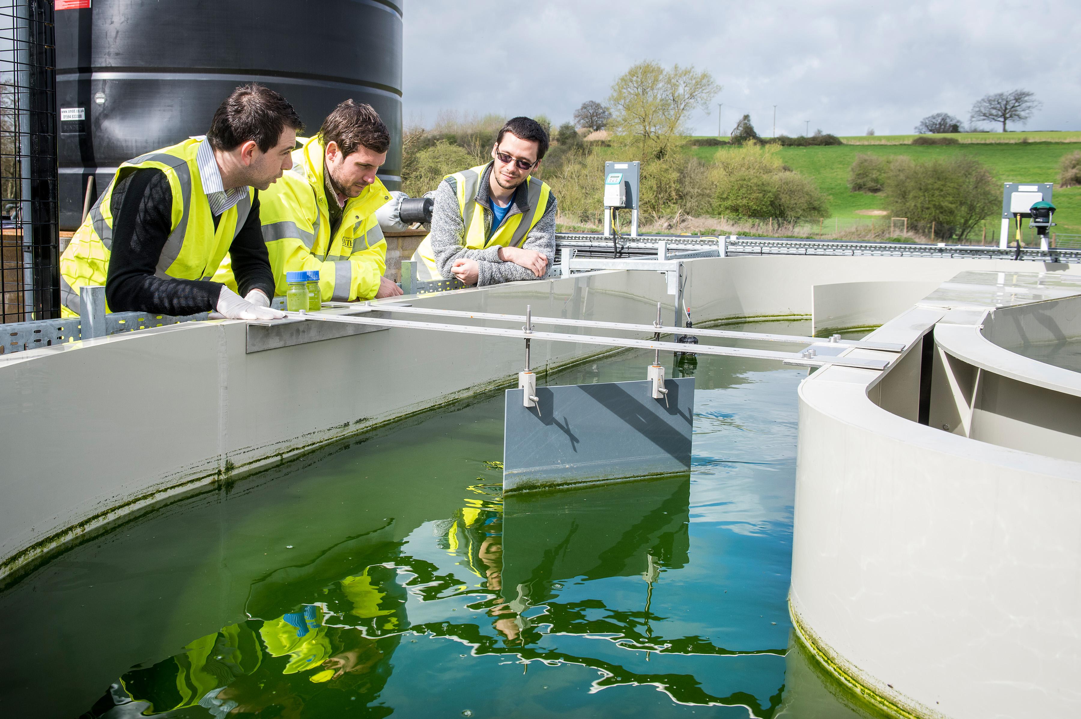 Algae water treatment