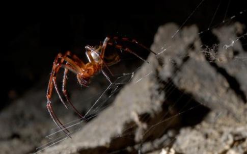 graphene spider