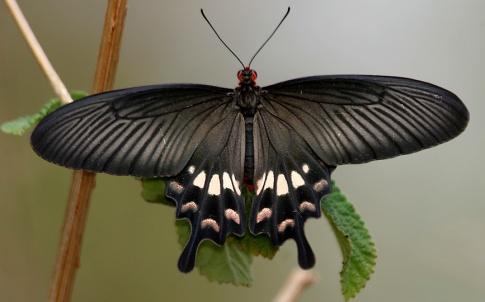 solar cells butterfly
