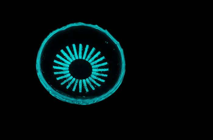 glowing contact lens